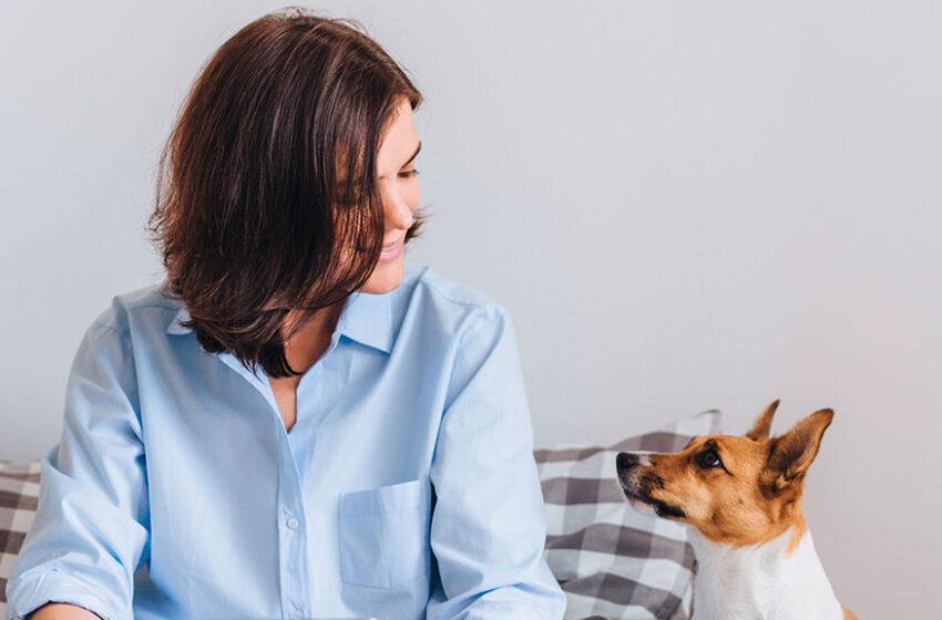 El futuro de las veterinarias: la Telemedicina