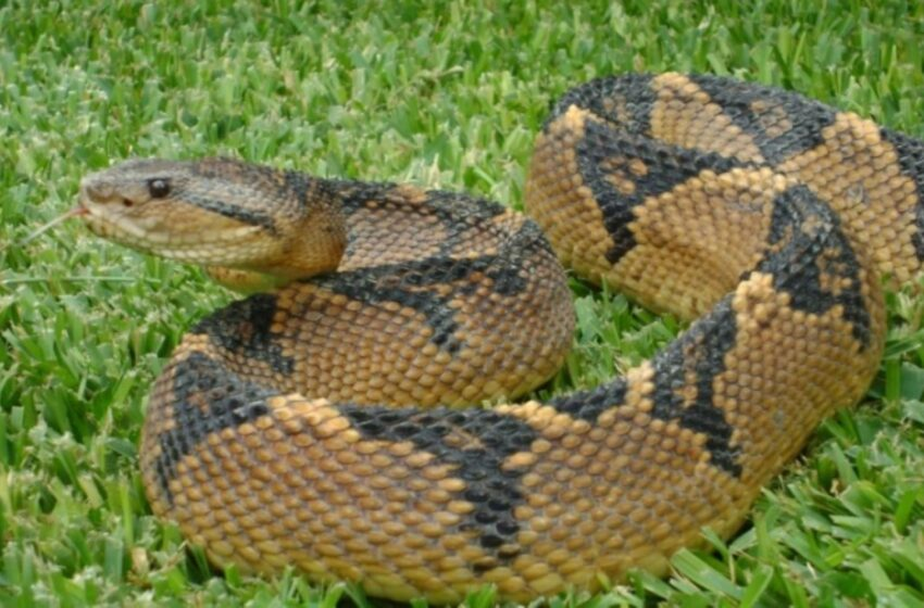Potencial farmacológico de las serpientes del Perú